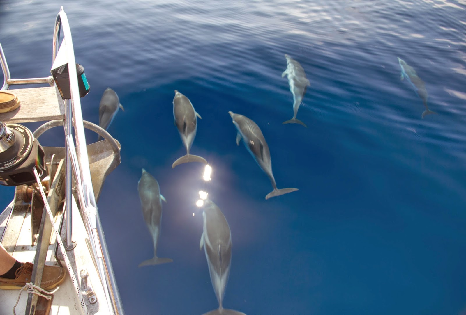 dolphins1aeolianislands